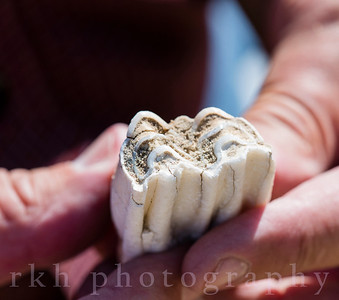 Fossilized Tooth on the Plains Rural America