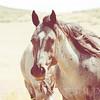 Horse in a Meadow in Sunlight Rural America