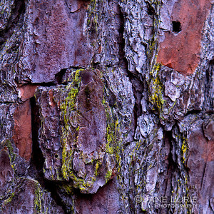 Bark, South Carolina
