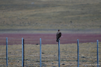 Fence and Caracara, Argentina, SA