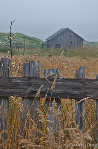Morning Fog, Barn and Fence, Sea Ranch, CA