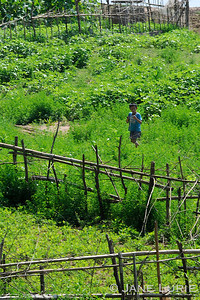 Boy and Fences, Mekong River, Laos