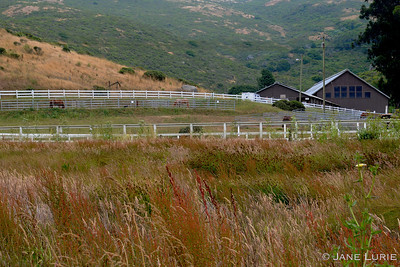 Fence and Horse Farm, Marin, CA