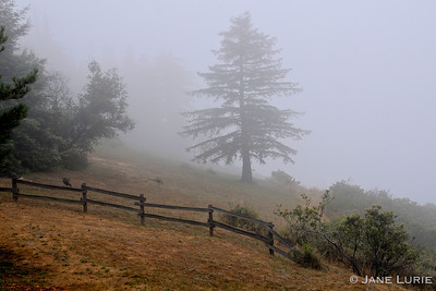 Fence and Morning Fog, Big Sure, CA