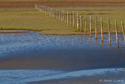 Low Tide and Fence, South Carolina