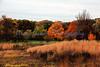 Prairie Autumn