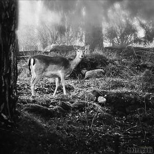 Good Mornin', My Deer Tyresö, Sweden