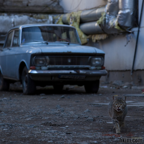 Discomfort: A Street Cat and a Rusty Car<br /> Sofia, Bulgaria