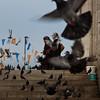 Girls 'n Doves<br /> Istanbul, Turkey