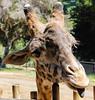 Santa Barbara Zoo 2012
