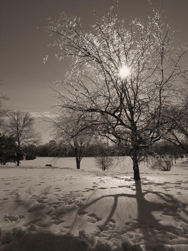 Icy Sunnybrooke Park