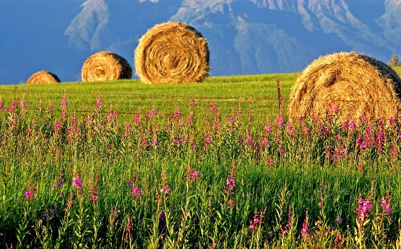 Alaska Farmland