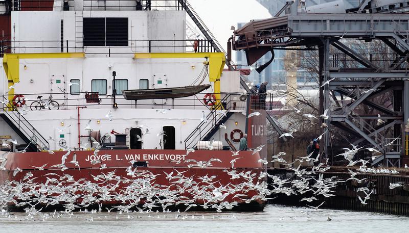 Ship and Gulls on Lake Eris