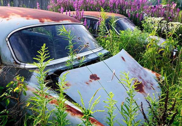I think I better cut the grass or I won't be able to get my cars out - Volvo Graveyard