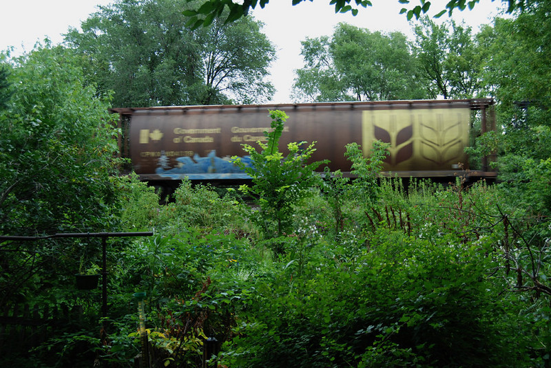 Trains in the garden
