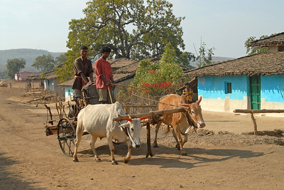 Bullock cart used to transport water from the nearest water source and brought to the village. Shot in a village near Nagpur, Maharashtra, India