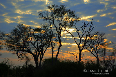 Morning Sky and Trees, Botswana