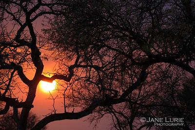 Acacia and Sunset, Botswana