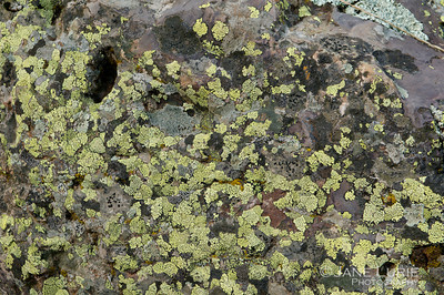 Lichens and Rock