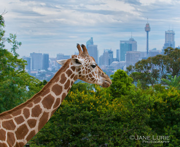 Room With A View, Taronga Zoo, Sydney