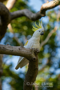 Good Morning to You, Mr. Cockatoo, Sydney Bot