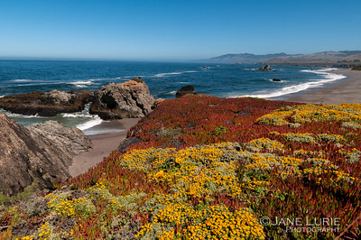 Coastal Beauty, Sonoma