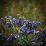 Jane Lurie Photography's photo
