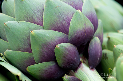 Leaves of Splendor, Castroville Artichoke
