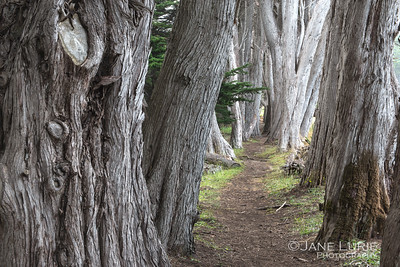 Cypress Path, Sea Ranch