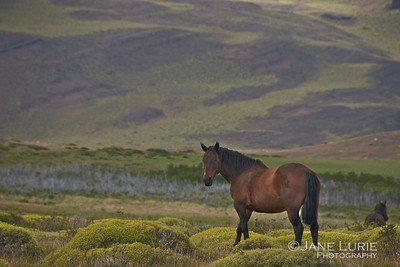 Early Morning Graze, Patagonia