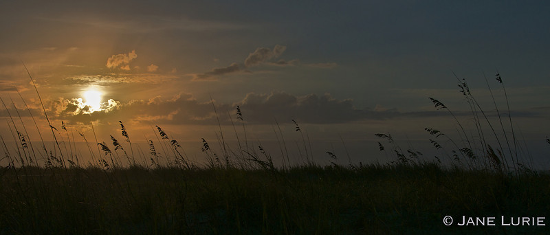 Sunrise and Oat Grasses, Kiawah Island, SC