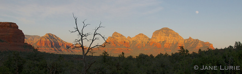 Tree, Rocks and Moon, Sedona