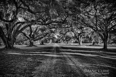 Live Oaks and Road, South Carolina