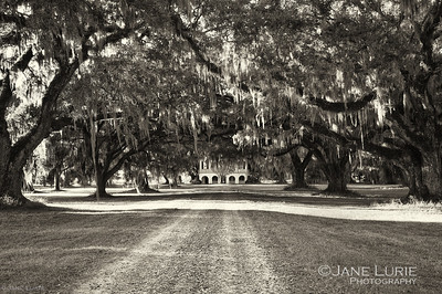 Antebellum Mansion and Live Oaks, Ace Basin, SC