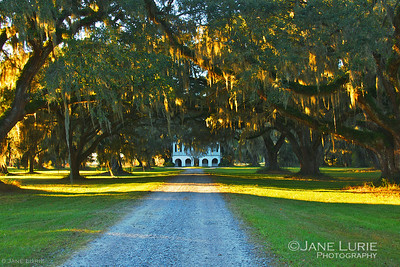 Sunrise at the Ace Basin. The early morning light glowing on moss covered live oaks.