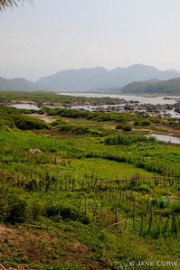The lush farmlands along the Mekong River, Laos.