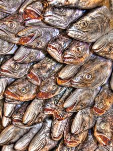 Fresh fish in the market, Cuenca, Ecuador.  Single image.