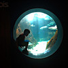 04 Jun 2007, Honolulu, Oahu, Hawaii, USA --- Logan Snow, 4, of Honolulu looks at sharks and a grouper at the Waikiki Aquarium in Honolulu, Hawaii, June 3, 2007.  REUTERS/Lucy Pemoni (UNITED STATES) --- Image by © LUCY PEMONI/X01574/Reuters/Corbis