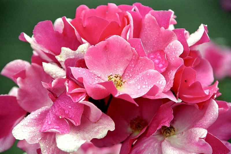 Pink Floral Cluster