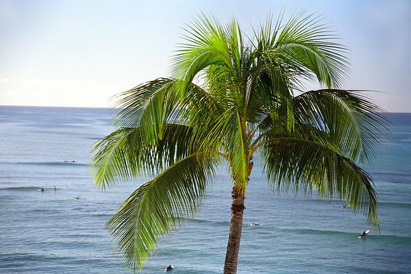 Hawaii - Palm Tree, close-up