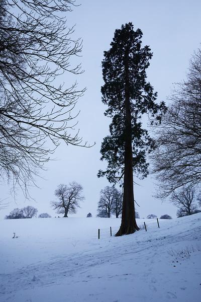 Snow Mar18 10