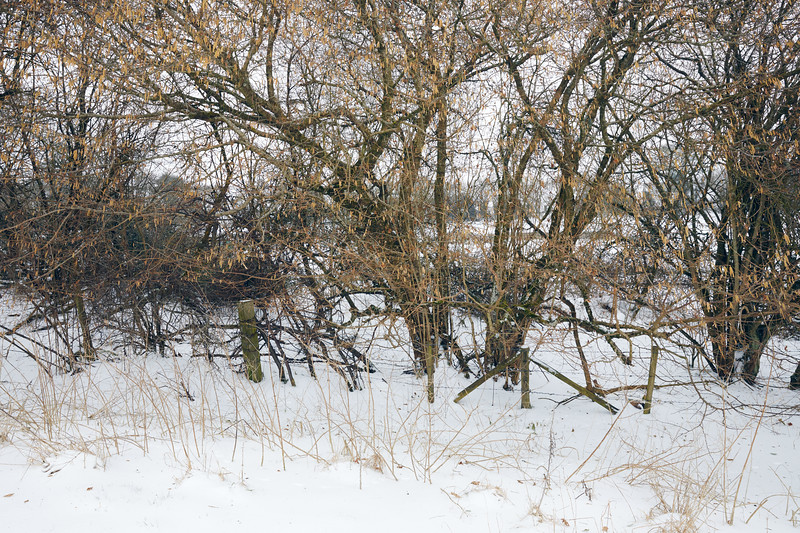 Snow Mar18 22