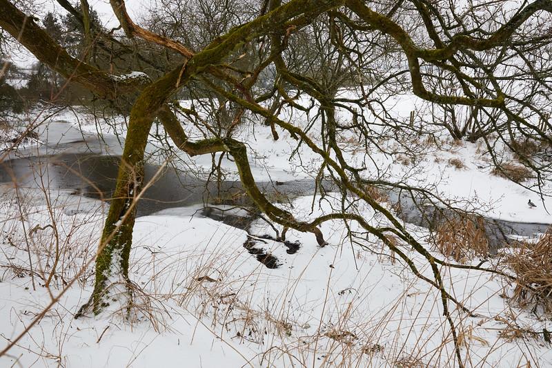 Snow Mar18 13