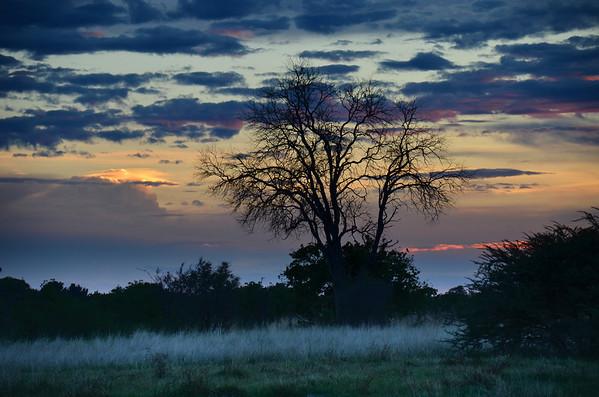 Sunset Tree Okavango