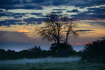 Sunset Tree Okavango