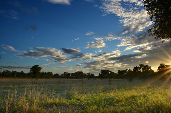 Grassland Sunset