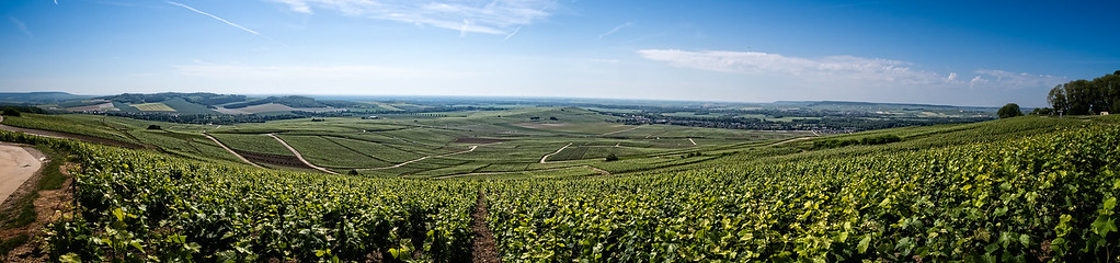 Mutigny Vineyards
