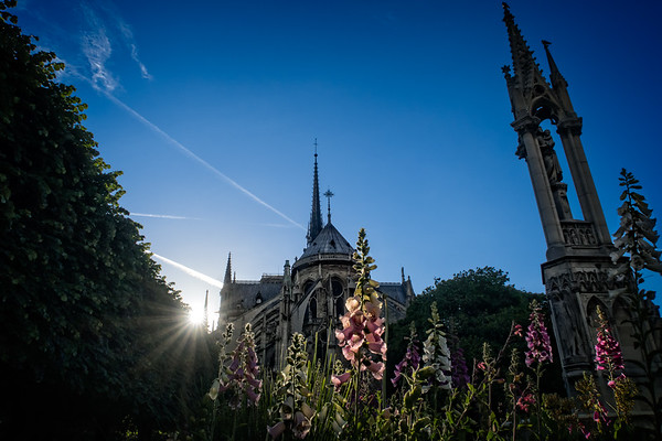 Notre Dame de Paris in Bloom