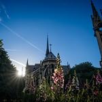 Notre Dame de Paris in Bloom