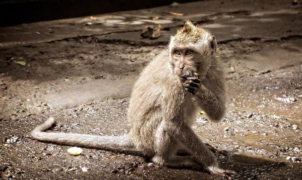 Monkey Ubud 2